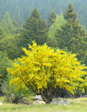 benessere-albero