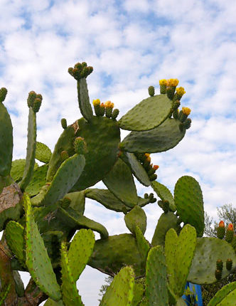 cactus-terapiadicoppia