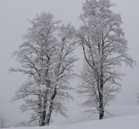 inverno-2-alberi-500