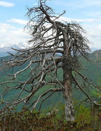 isolamento-albero